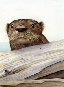 River Otter illustration by Nora Sherwood