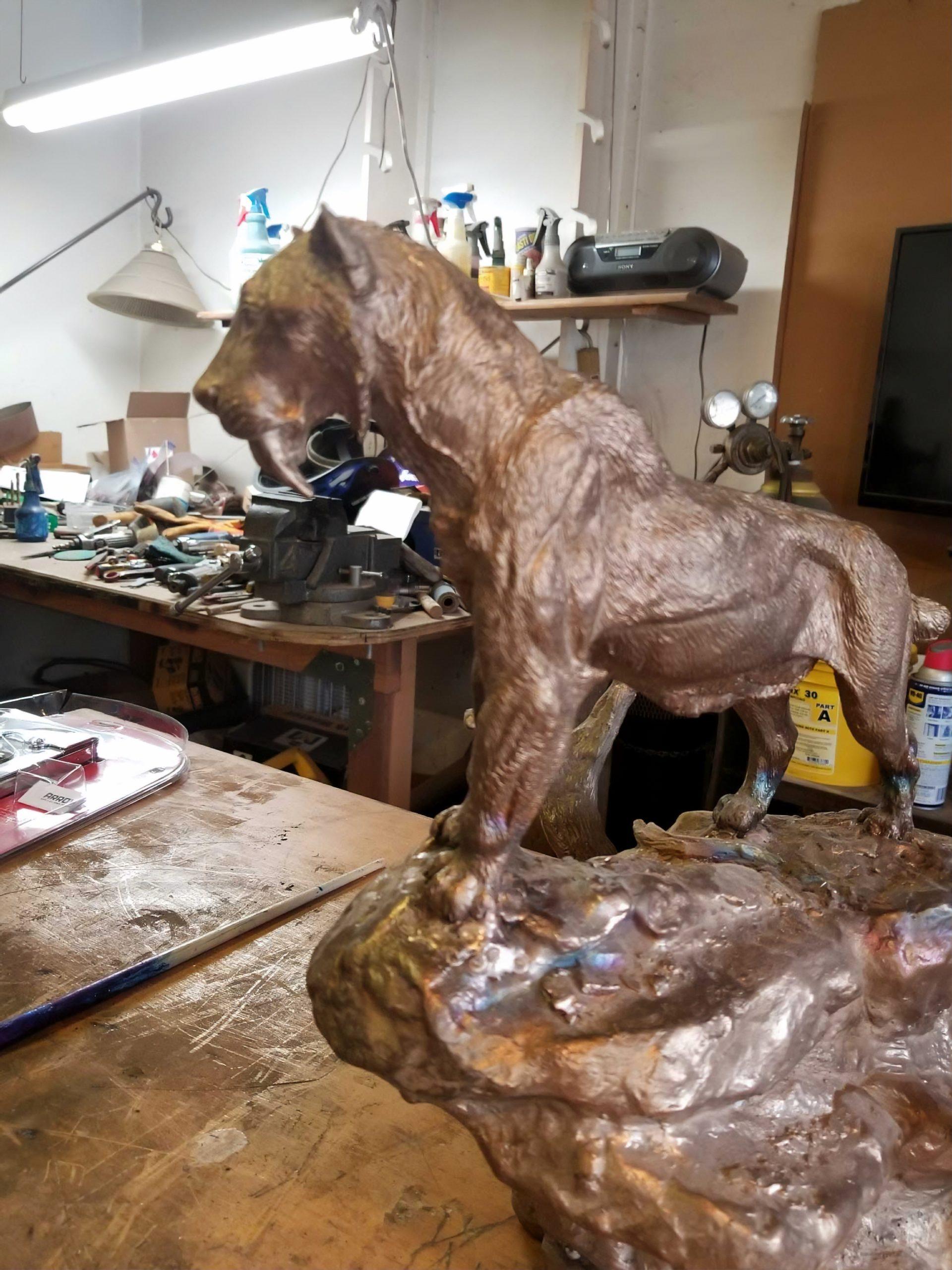 Bronze Sabretooth tiger in progress in studio