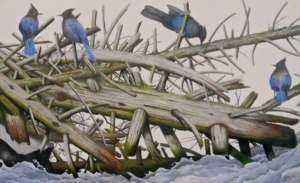 Colored pencil drawing on paper of Blue Jays perched on a stack of dead wood on snow
